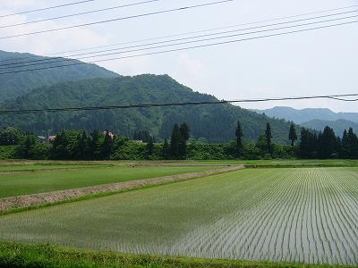 新潟県南魚沼市はだんだん夏らしくなってきました