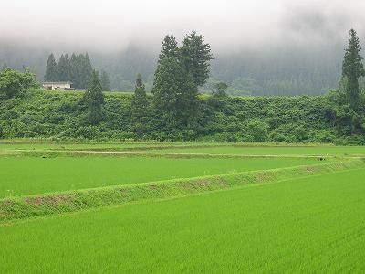 雨上がりの朝@新潟県南魚沼市の田んぼ
