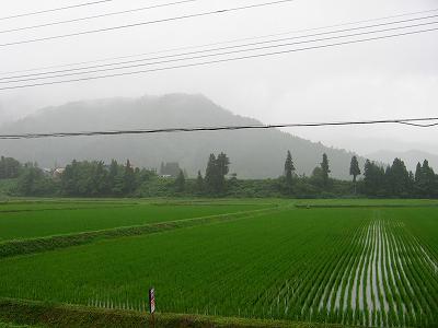 午後は強い雨降りでした@魚沼産コシヒカリの田んぼ