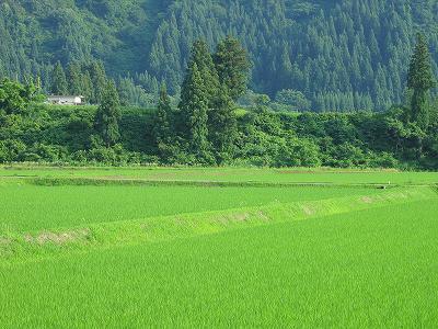 新潟県南魚沼市は暑い一日でした