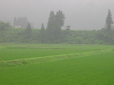 今朝は霧雨が降っています