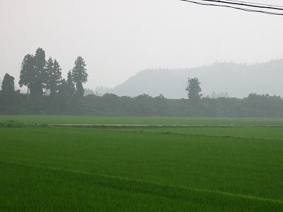 魚沼産コシヒカリの田んぼは雷雨になっています