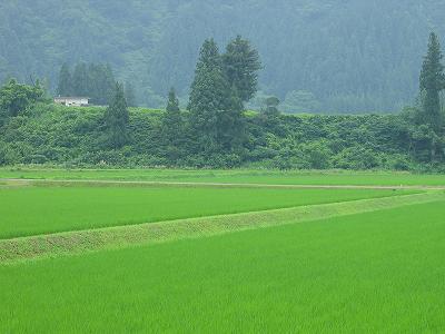夏とは思えないほどの涼しい朝です@新潟県南魚沼市