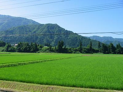 新潟県南魚沼市は今朝もまた青空で暑くなってきました