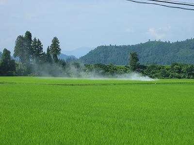 今日も魚沼産コシヒカリの田んぼではアオムシ対策の消毒作業が行われています