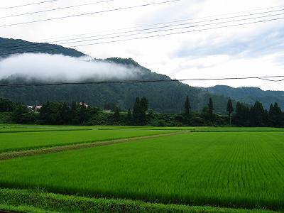 今朝は久しぶりの雨で涼しいです
