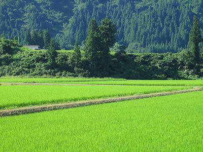 今朝の新潟県南魚沼市は快晴の青空です