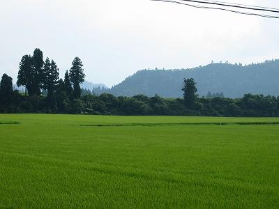 むし暑い一日でした@魚沼産コシヒカリの田んぼ