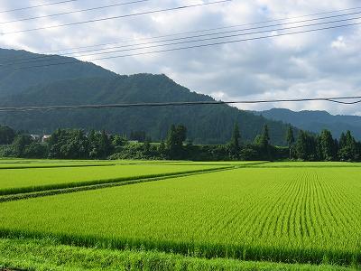 まだまだ暑い日が続きそうです@魚沼産コシヒカリの田んぼ