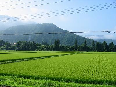 暑さはまだまだ続きますね@魚沼産コシヒカリの田んぼ