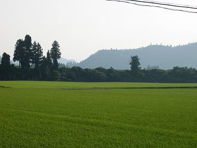 猛暑が続いています@魚沼産コシヒカリの田んぼ