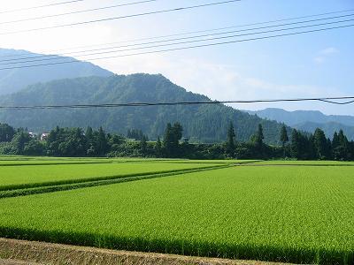 まだしばらく猛暑は続くようです@魚沼産コシヒカリの田んぼ