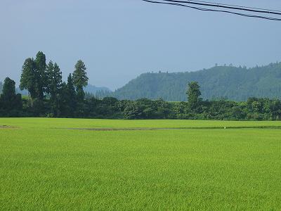 猛暑がようやく残暑になった気がします@魚沼産コシヒカリの田んぼ