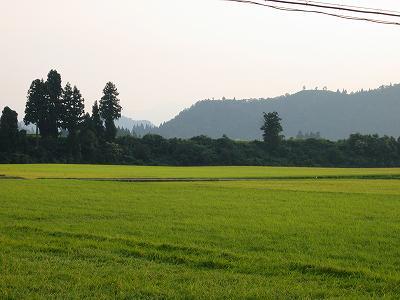 まだまだ猛暑は続いています@魚沼産コシヒカリの田んぼ
