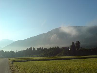 早朝の魚沼産コシヒカリの田んぼ