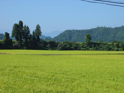 まだ暑いですが猛暑は過ぎたようです@魚沼産コシヒカリの田んぼ