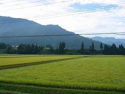 今朝はくもりで少しだけ青空が見えています@魚沼産コシヒカリの田んぼ