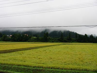 今朝は雨上がりで涼しいです