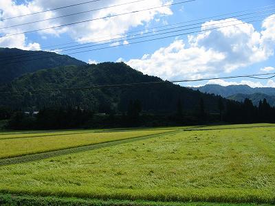 青空が見えて爽快な一日です@魚沼産コシヒカリの田んぼ
