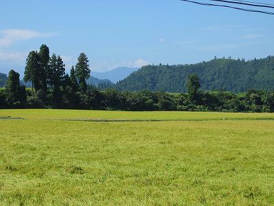 秋を感じる爽やかな朝です@魚沼産コシヒカリの田んぼ