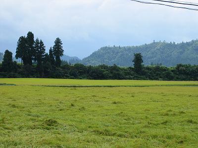 午後になってお日様が顔を見せました@魚沼産コシヒカリの田んぼ