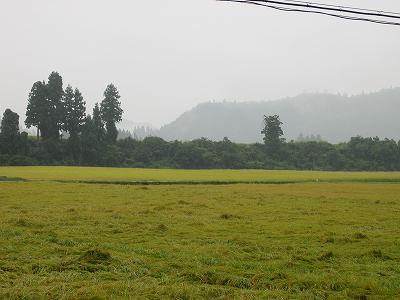 今朝は雨・・・山は霧に覆われています