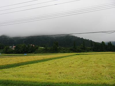 空は重たい雲に覆われています@魚沼産コシヒカリの田んぼ