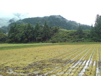 晴れ間を見つけて稲刈りを行っている田んぼがありました