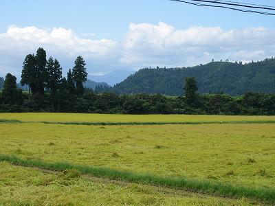 この週末は稲刈り作業がピーク@魚沼産コシヒカリの田んぼ