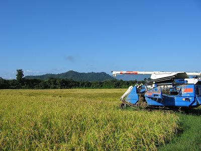 稲刈り直前の魚沼産コシヒカリの田んぼとコンバイン