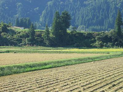今日はすばらしい秋晴れ・・・稲刈り作業も盛んになります