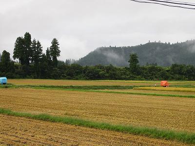 今朝は雨降りで稲刈り作業はいったん中止です