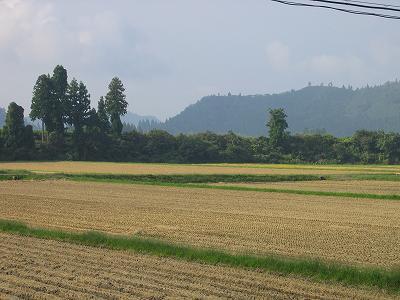 今日はいい天気になりそうです@魚沼産コシヒカリの田んぼ