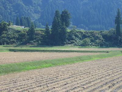 今日は秋晴れでやや暑く感じます@魚沼産コシヒカリの田んぼ