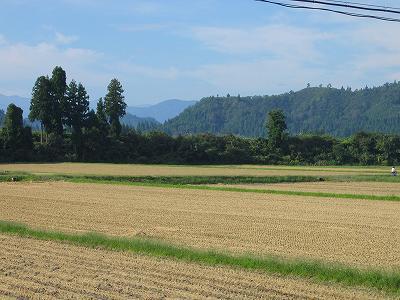 今日も朝からさわやかな秋晴れです@魚沼産コシヒカリの田んぼ