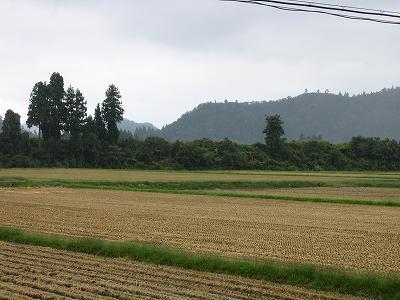 午後になって雨が降りはじめました@魚沼産コシヒカリの田んぼ