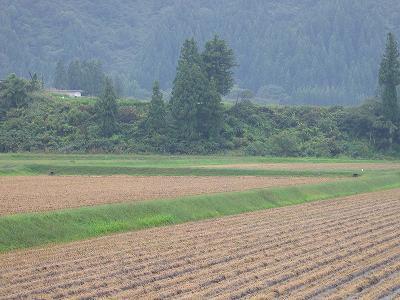 雨降りの一日でした@魚沼産コシヒカリの田んぼ