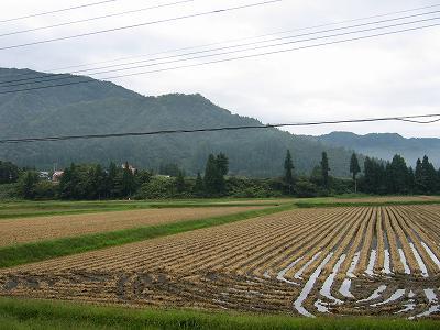 雨上がりでちょっと肌寒い朝でした@魚沼産コシヒカリの田んぼ