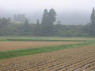 くもりで肌寒い朝です@魚沼産コシヒカリの田んぼ