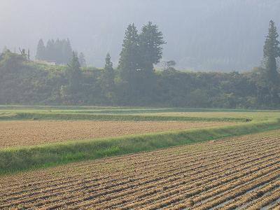 朝日がまぶしいです@魚沼産コシヒカリの田んぼ