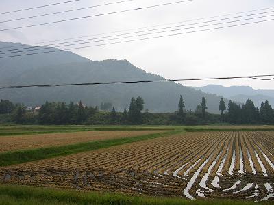 くもりで秋の深まりを感じる朝です@魚沼産コシヒカリの田んぼ