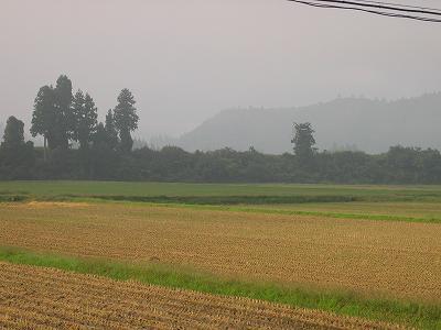 霧が濃い朝でした@魚沼産コシヒカリの田んぼ