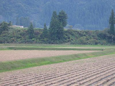 秋の穏やかな一日でした@魚沼産コシヒカリの田んぼ