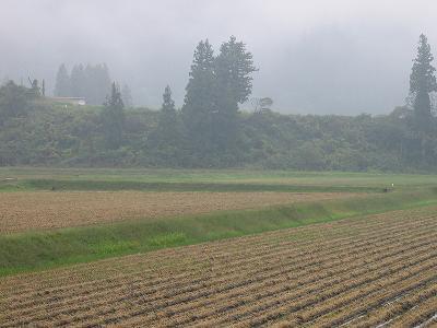 霧の朝@魚沼産コシヒカリの田んぼ