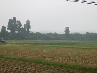今朝は雨降りです@魚沼産コシヒカリの田んぼ