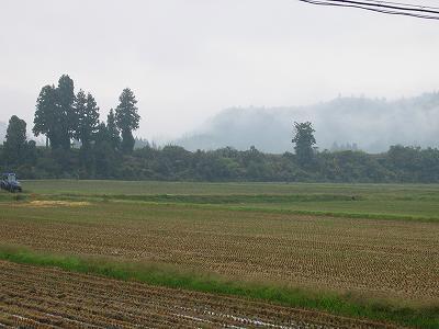 雨降りで寒い朝です@魚沼産コシヒカリの田んぼ