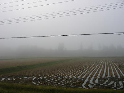 霧雨の朝@魚沼産コシヒカリの田んぼ