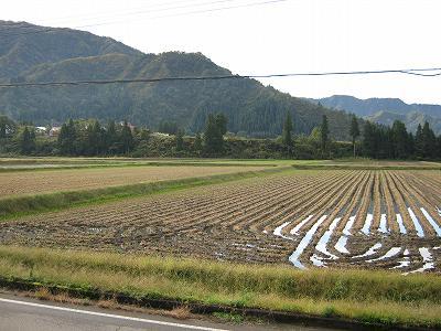 青空が見えて、あたたかい朝@魚沼産コシヒカリの田んぼ