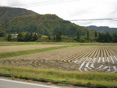今日はくもりで肌寒いです@魚沼産コシヒカリの田んぼ