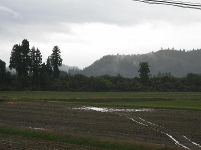 魚沼産コシヒカリの田んぼは気温が低く、冷たい雨が降っています
